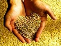 Казахстанская пшеница 3,4,5 классы на экспорт по ГОСТу, в г.Астана