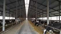 Молочно-животноводческая ферма на 2000 коров с молодняком на базе фермерского хозяйства, в Пятигорске