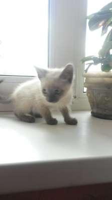 Дарим котят, симпатичные, чистоплотные, самостоятельные в Иркутске Фото 1