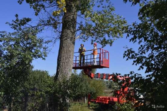 Спилить, удалить дерево в Щелково, Щелковском районе Фото 2