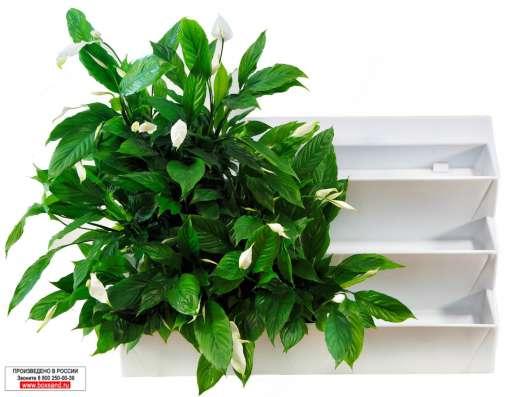 """Фитомодуль 104х67 см для вертикального озеленения """"BOXSAND 2 в Ставрополе Фото 5"""
