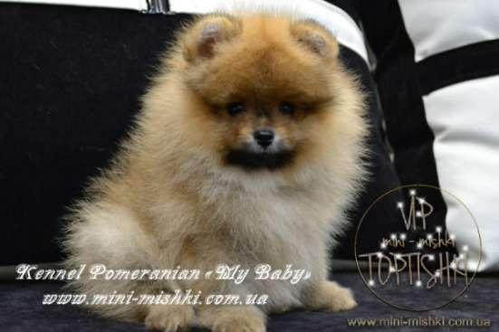 Шикарнейшие мини-щенки карликового померанского шпица SHOW-Classa!!!