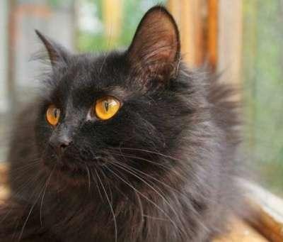 Отдам даром Котик Черный в добрые руки.