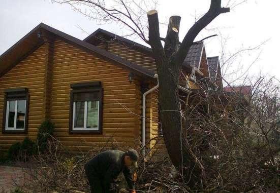 Устранение спиливанием старых деревьев в Москве Фото 1