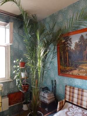 Финиковая пальма 3,5 м в Москве Фото 3