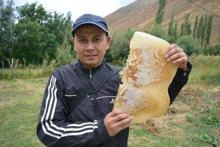 """Обучение, бизнес курс """"Пчеловодство"""" в г. Бишкек Фото 2"""
