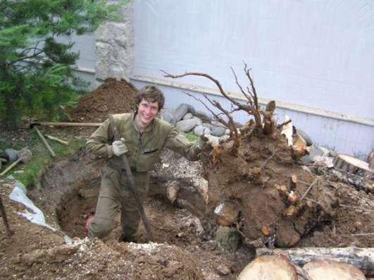 лка (вырубка) деревьев. Обрезка веток. Корчевание пней в Новосибирске Фото 1