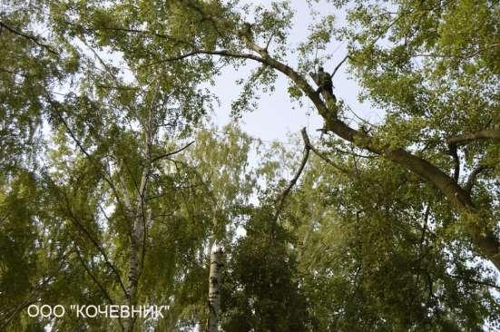 удаление опасных аварийных деревьев - кронирование - санитар