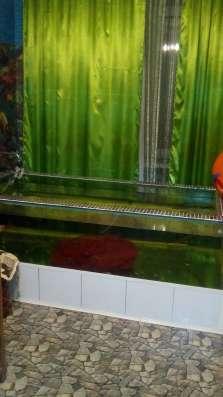 Массаж улитками и рыбками