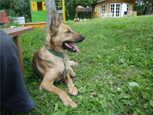 Молодой пес дик в Москве Фото 3