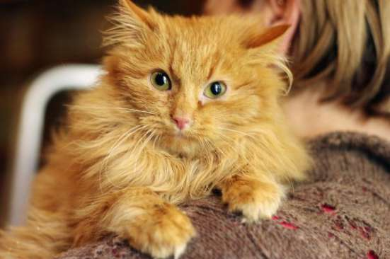 Котенок Апельсин в целом мире он один.  дар.