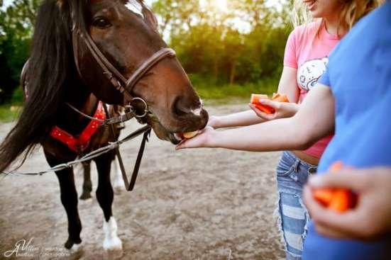 Катания на лошадях, конные прогулки, прокат лошадей в Ростове-на-Дону