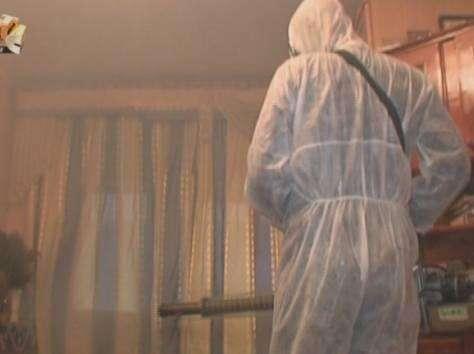Уничтожение комаров, клещей, тараканов, плесени, крыс, ос, шершней, муравьёв, блох, кротов в Орехово-Зуево и Орехово-Зуевском районе