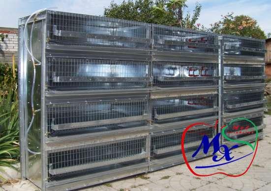 Специальное клеточное оборудование для перепеловодства