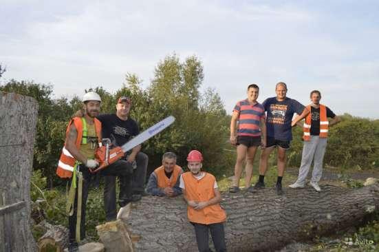 Удаление Опасных Аварийных Проблемных Деревьев в Жуковском