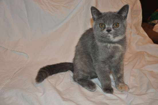Продажа котят в Кемерове Фото 4
