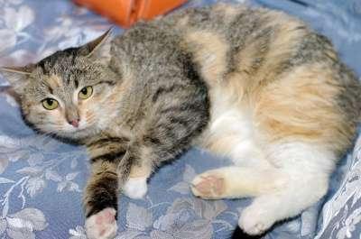Отдам даром Трехцветный котенок Дусенька в Москве Фото 1