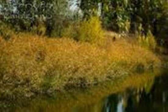 Продается два смежных участка в с.Красновка в г. Симферополь Фото 3