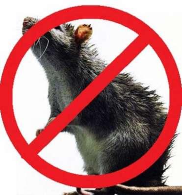 Клопы, тараканы, мухи, муравьи, крысы, мыши - избавляем