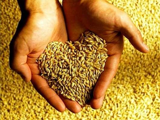 Казахстанская пшеница 3,4,5 классы на экспорт по ГОСТу