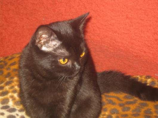 Клубные котята питомника''sweettoy