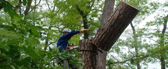 Спиливаем деревья качественно и быстро любого масштаба