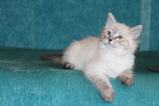 Кот в г. Харьков Фото 2