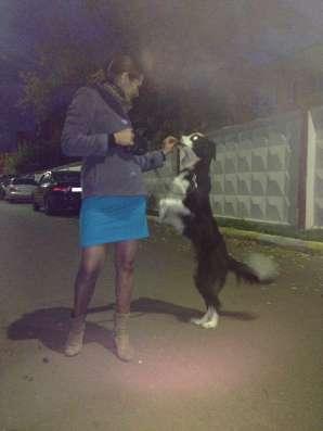 Выгул собак в Раменское Фото 4