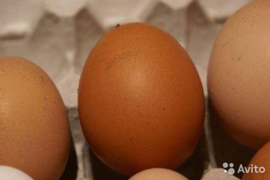 Настоящие. Натуральные. Деревенские. Куриные яйца