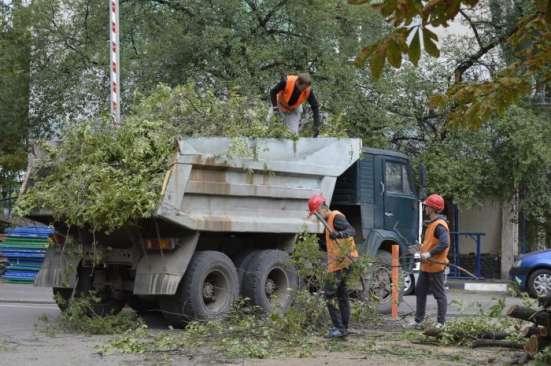 Удаление деревьев в Электростале Фото 5