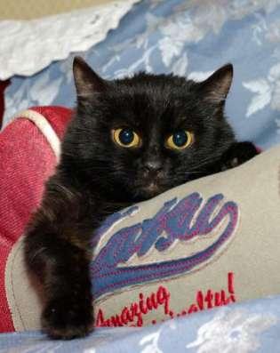Черная восточная ночь - котенок Суламифь в дар. в Москве Фото 2
