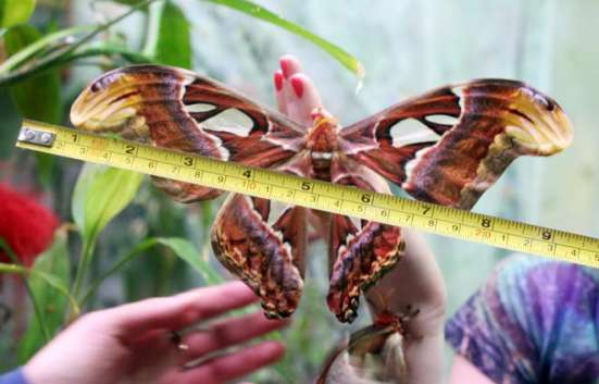 Живая бабочка к 8 марта!