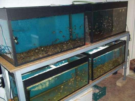 Продам аквариумное хозяйство