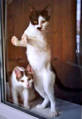 Веселый пиратик - котенок Зось ищет дом. в Москве Фото 4