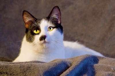 Отдам даром Чудесный котенок подросток Чарли ищет до