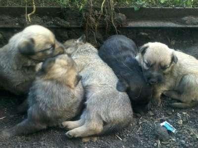 Отдам даром Дарим щенят. в Набережных Челнах Фото 2