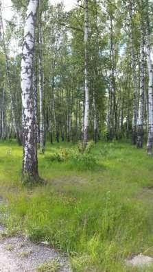 Симферопольское шоссе, участок с лесными деревьями, г. Чехов